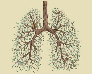 lungs formed by tree